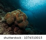 freediver and coral reef in... | Shutterstock . vector #1076510015