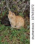 cats on street | Shutterstock . vector #107651072