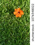 Small photo of Orange flower bloom on green grass or sward. Vertical color image.