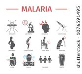 malaria flat icon infographics. ... | Shutterstock . vector #1076591495