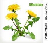 dandelion flowers  3d vector...