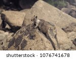 the squirrel is stay on the... | Shutterstock . vector #1076741678