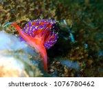 underwater marine life | Shutterstock . vector #1076780462