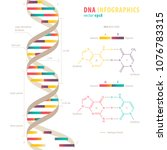 dna structure  colorful... | Shutterstock .eps vector #1076783315