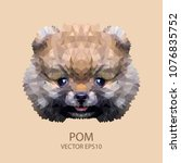 face brown pomeranian... | Shutterstock .eps vector #1076835752
