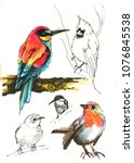 several bird sketch fulcolor ... | Shutterstock . vector #1076845538