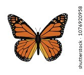 Stock vector butterfly solo vector 1076920958