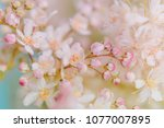 small white summer flowers on a ... | Shutterstock . vector #1077007895