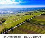 wineyards in rheinhessen germany