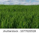 tall green grass and a cloudy... | Shutterstock . vector #1077020528