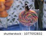 butterfly eats orange  | Shutterstock . vector #1077052832