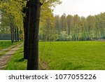 meadows  forest and country... | Shutterstock . vector #1077055226