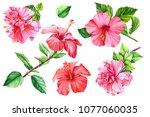 set tropical flower  hibiscus... | Shutterstock . vector #1077060035