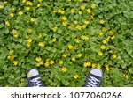 directly above shot of pair of... | Shutterstock . vector #1077060266