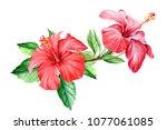 bouquet tropical flower... | Shutterstock . vector #1077061085