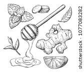 honey  ginger  lemon and mint... | Shutterstock .eps vector #1077083282