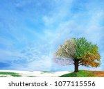 four season tree.winter  autumn ... | Shutterstock . vector #1077115556