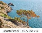 pine on the edge of mountain... | Shutterstock . vector #1077251912