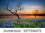 beautiful texas spring sunset... | Shutterstock . vector #1077266672