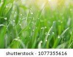 macro of raindrop. composition... | Shutterstock . vector #1077355616