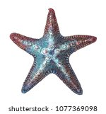 hand drawn sea starfish isolated | Shutterstock . vector #1077369098