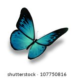 blue butterfly flying  isolated ... | Shutterstock . vector #107750816
