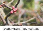 awakening plants in the spring. ... | Shutterstock . vector #1077528602