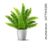 vector realistic fern in a pot. ... | Shutterstock .eps vector #1077545285