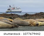 Small photo of Expedition ship Orion sits in the lee of Macquarie Island, south of Tasmania. The island offers breeding grounds to a variety of penguins, albatross and seals and the beaches teem with life