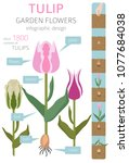 Tulip Varieties Flat Icon Set....