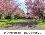 scenic springtime view of a... | Shutterstock . vector #1077695522