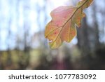 Small photo of B-Side of Fall Leaf