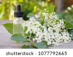 elderberry essential oil ... | Shutterstock . vector #1077792665