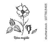 botanic handdrawn vector... | Shutterstock .eps vector #1077815405