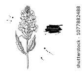 mustard plant branch vector... | Shutterstock .eps vector #1077882488
