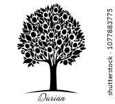 durian tree isolated on a white ... | Shutterstock . vector #1077883775