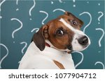 thinking dog with questions mark | Shutterstock . vector #1077904712