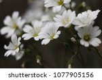 beautiful flowers in spring | Shutterstock . vector #1077905156