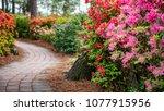 azalea and flower garden in... | Shutterstock . vector #1077915956