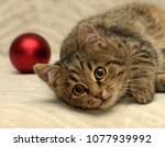 Stock photo young striped british cat and christmas balls 1077939992
