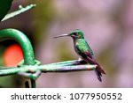 Hummingbird In The Jungle In...