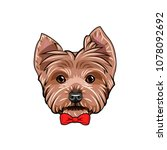 yorkshire terrier dog. red bow. ... | Shutterstock .eps vector #1078092692