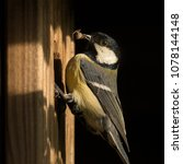 great tit  parus major  with... | Shutterstock . vector #1078144148
