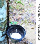 Small photo of Tapping latex from a rubber tree