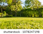Interesting, ground level view of a shallow focus image of recently cut grass seen in a large, well-kept garden in summer. The background shows out of focus apple trees and a long hedgerow.