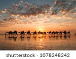 A golden sunset on Cable Beach featuring the famous Broome Camel ride.