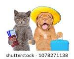Kitten And Puppy In Summer Hat...