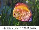 red and white discus in... | Shutterstock . vector #1078322696