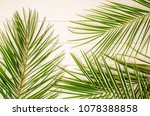 palm leaves on a white wooden... | Shutterstock . vector #1078388858