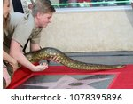 Small photo of LOS ANGELES - APR 26: Robert Irwin wrangling an green anaconda named Angelina at the Steve Irwin Star Ceremony on the Hollywood Walk of Fame on April 26, 2018 in Los Angeles, CA